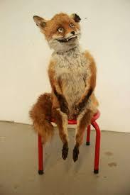 Stoned Fox Meme - stoned fox el último fenómeno imagen rjb 86 en taringa