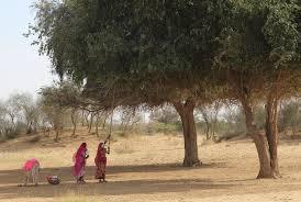 thar desert gathering fruit thar desert where to next