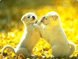 cute puppies 2 wallpapers wonderful and marvelous pictures of puppy and dog nice
