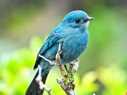 blue bird on branch aqua to turquoise pinterest bird birds