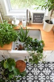 36 best indoor plants images on pinterest indoor plants house