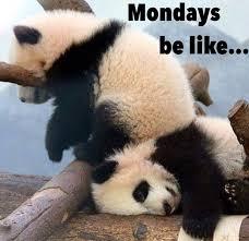 Funny Panda Memes - funny goofy cute silly but understandable baby panda cub meme