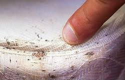 How To Avoid Bed Bugs Prevent Bed Bugs Iowa Bed Bug Control