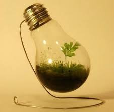 green light bulb meaning use a light bulb to start a mini green house for a friend who s been