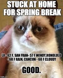 Meme Generator Grumpy Cat - th id oip gfpxbnukxonbquvmpos8xwhaji