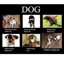 Do Memes - 45 funny dog memes dog memes funny puppies and dog