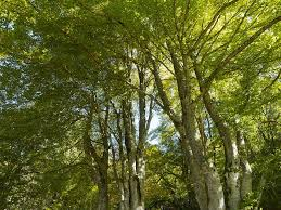 free photo trees nature leaves trunk wood free image on
