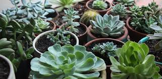 plants that grow in dark rooms how to grow succulents in artificial light needles leaves