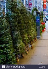 Christmas Trees New York Christmas Trees On Sale On A Public Sidewalk In New York City With
