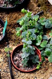 29 august 2016 northumberland alpine gardener u0027s diary