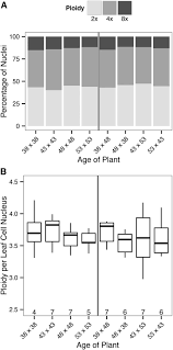 different shades of gray parental age affects somatic mutation rates in the progeny of
