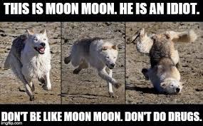 3 Wolf Moon Meme - moon moon memes imgflip