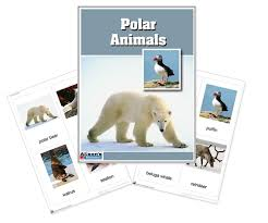 montessori materials polar region animals nomenclature cards