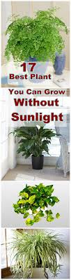 plants that don t need sunlight to grow the cracked mug life plants that grow without sunlight the