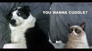 Grumpy Cat Meme No - images of grumpy cat wallpaper fan