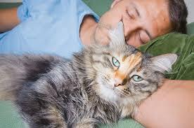 pet euthanasia pet euthanasia dog euthanasia cat euthanasia sacramento