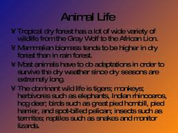 Tropical Dry Forest Animals And Plants - tropical dry forest biome