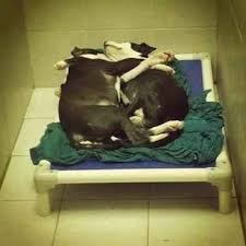 Blind Dog And His Guide Dog 17 Best Blind Dogs Images On Pinterest Blind Pet Health And 10