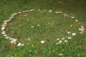 Types Of Garden Mushrooms - do you dare enter a fairy ring the mythical mushroom portals of