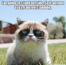 Tard The Grumpy Cat Meme - grumpy cat quotes grouchy quotes grumpy cat jokes grumpy cat