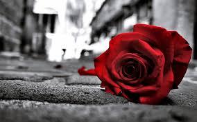 theme black rose rose windows 10 theme themepack me