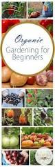 best 25 organic vegetables ideas on pinterest small organic