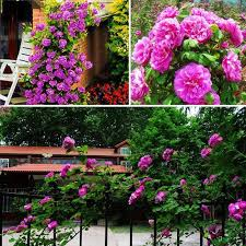 flowers for sale hot sale seeds purple white pink yellow green blue plant