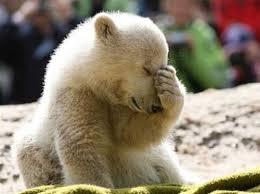 sad bear blank template imgflip