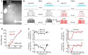 distinct lateral inhibitory circuits drive parallel processing of