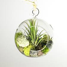 makerskit hanging air plant terrarium amazon com grocery