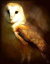 owl paintings barn owl digital painting by normanraw i would