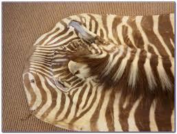 zebra hide rug ikea rugs home design ideas wj9lvenjgd