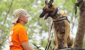 belgian shepherd for sale philippines mmda trains pet dogs to be lifesavers