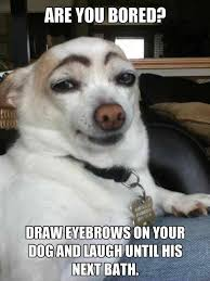 Cool Dog Meme - always find people with terrible eyebrows the bus station