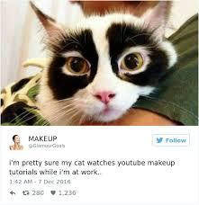Meme Cute - when your pet watches youtube makeup tutorial funny meme cute