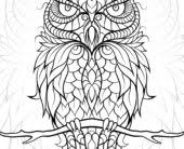 coloring page for adults owl coloring pages adult owl coloring page getcoloringpages coloring