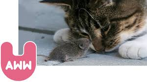 cat and mouse become best friends youtube