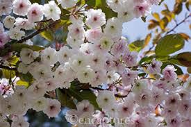 take a bough tree care s ideas on 5 trees for a small garden