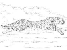 running cheetah coloring color animals