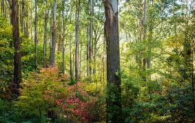 forest glade gardens mount macedon 7 u2013 john mitchell photography