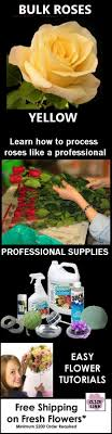 cheap bulk flowers cheap bulk flowers yellow roses find everything you need for diy