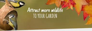 Rock Garden Plants Uk by Cj Wildlife Bringing You High Quality Wildlife Products