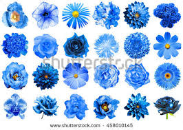 blue flowers collage surreal blue flowers 24 stock photo 458010145