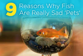 Goldfish In A Vase 9 Reasons Why Fish Are Really Sad U0027pets U0027 Peta