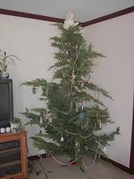 brown s christmas tree bungalow dreams brown s christmas tree
