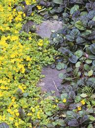 Backyard Ground Cover Options 161 Best Ground Covers For Covering The Ground Images On Pinterest