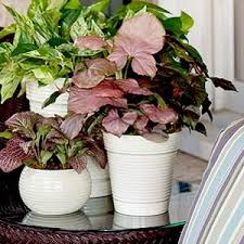 House Plants Diseases - 10 best house plants pests and diseases images on pinterest
