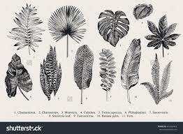 Plan Icon Stock Photos Images Amp Pictures Shutterstock Set Leaf Exotics Vintage Vector Botanical Illustration Black