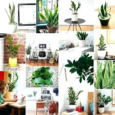 Best Plant For Office Desk Office Desk Plants Kresofineart
