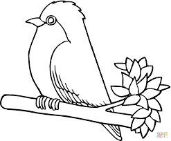 robin bird coloring page free printable coloring pages